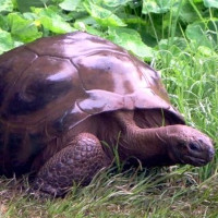 People have only just found out that this 186-year-old tortoise may be gay.